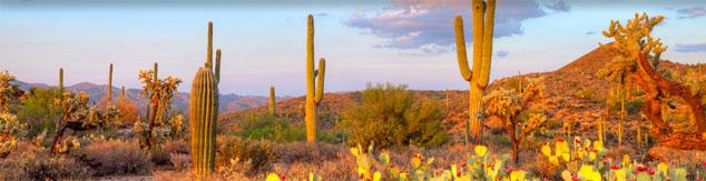 Desert_Pic_Content